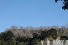 Cliff tops above Rangitikei River at Vinegar Hill