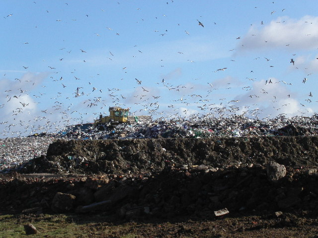From the Chronicle: Odour and vermin some of concerns raised about landfill