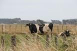 NZ, where Glyphosate is an integral part of farming