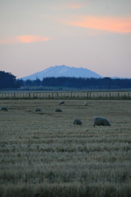Ruapehu at Sunset