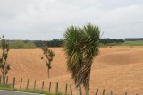 Manawatu field sprayed with Roundup