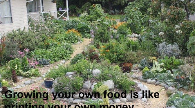 """There's something spiritual about touching the soil"" – on urban farming and why much of the world starves"