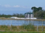 Leachate is dumped into Marton's WWTP in unknown quantities under a 'gentleman's agreement', regularly exceeding consent levels