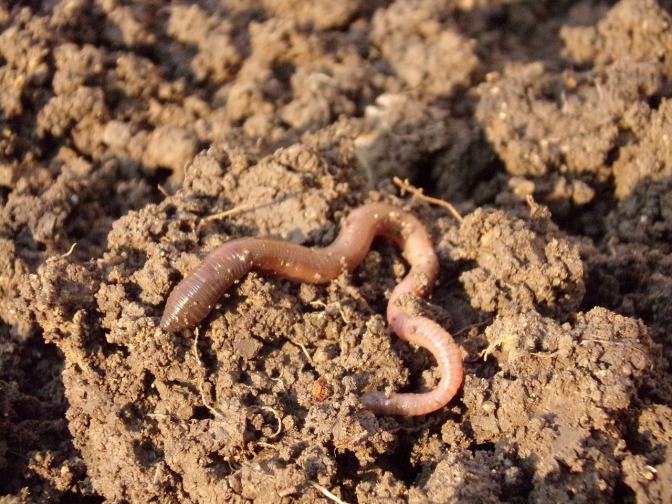 NZ Government Classifies Worm Farming as a High Risk Industry … Along with Bee Keeping & Cat Breeding