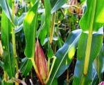 plant-476921_1280