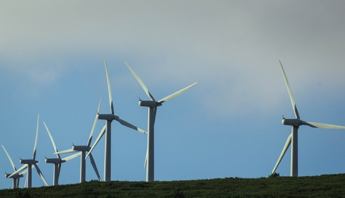 The less publicized hazards of wind farms