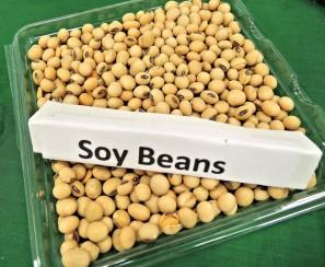 soy-beans-968986_1920