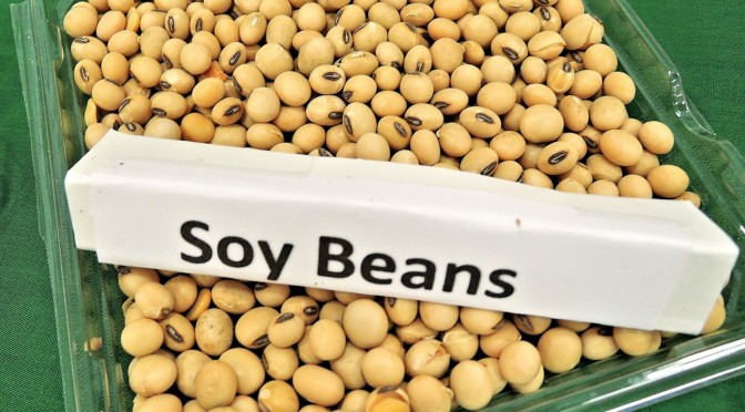 Monsanto faces multi-million dollar challenge to disprove the independent research on their GM soy