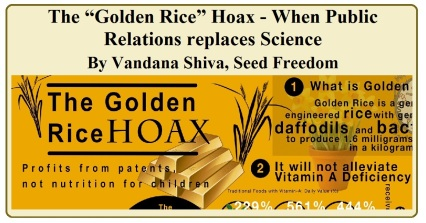 """The """"Golden Rice"""" Hoax' - When Public Relations replaces Science by Vandana Shiva (Seed Freedom, republished in blog)"""