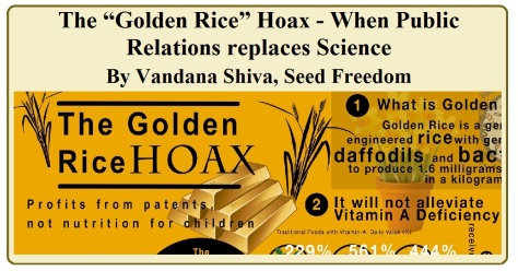 "The ""Golden Rice"" Hoax' - When Public Relations replaces Science by Vandana Shiva (Seed Freedom, republished in blog)"
