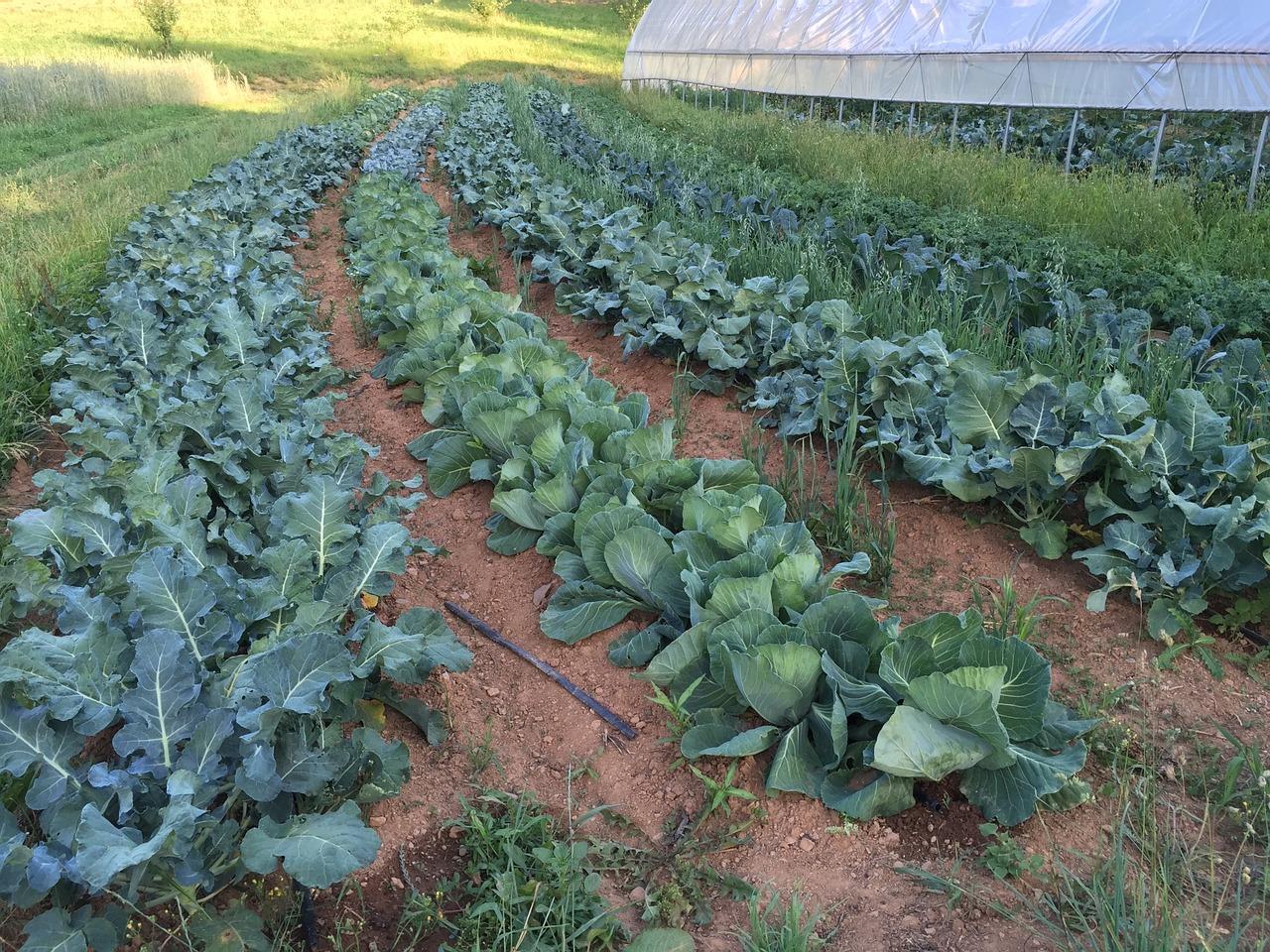 farm-1094434_1280