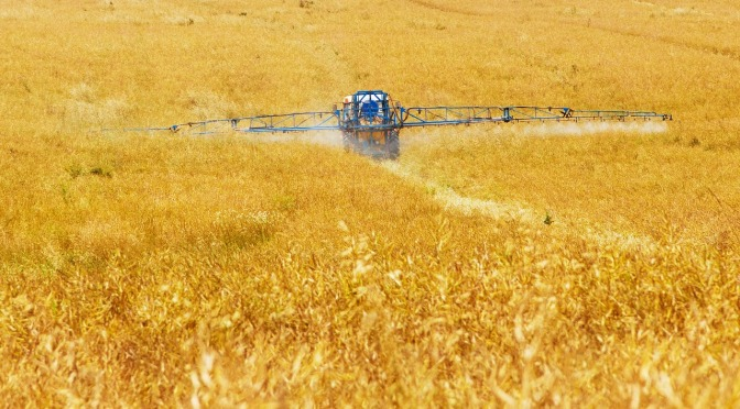 Low level Roundup residues in food linked to serious liver disease