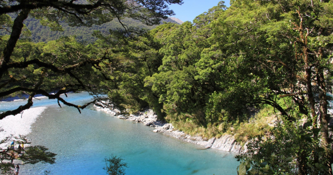 Tributaries that flow into the Blue Pools & Lake Wanaka poisoned with 1080 – no signs out & horrified tourists oblivious to risks of swimming & ingesting the water