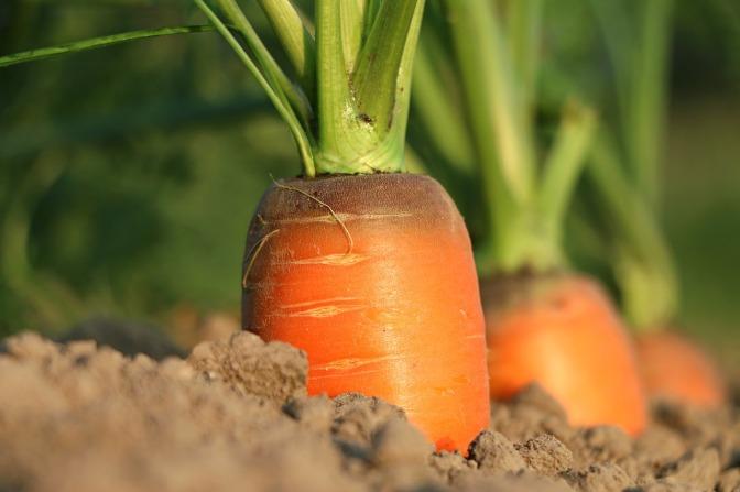 Innovative DIY Ways to Create an Organic & Even Indoor Vegetable Garden
