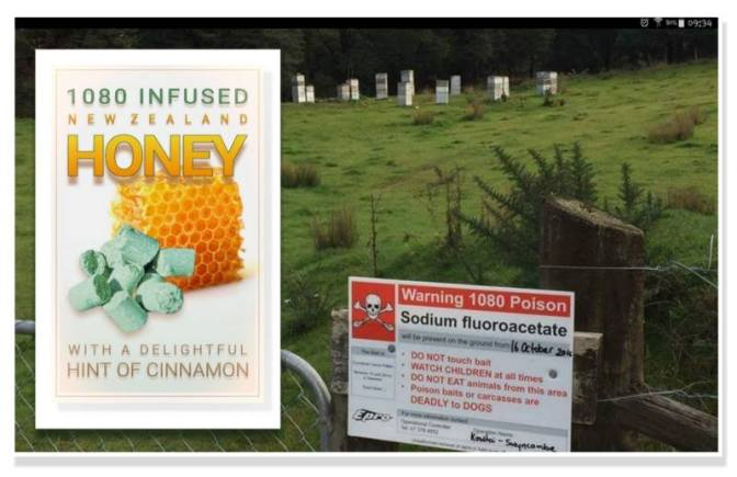 Hungry Bees 1080 Poison Risk to NZ Honey Says DoC