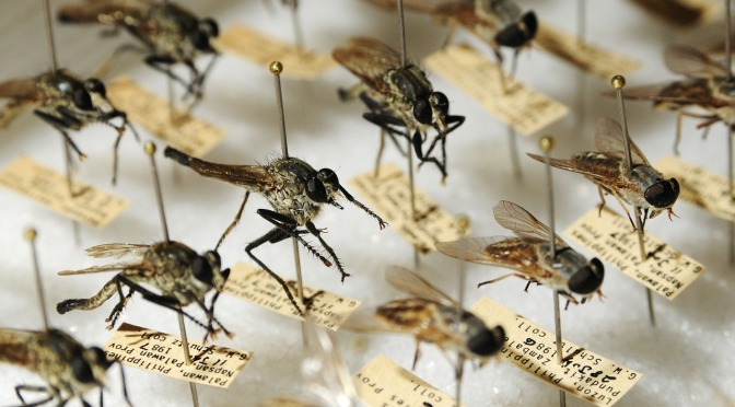Australia and New Zealand to be test sites for GM insect trials courtesy of DARPA!