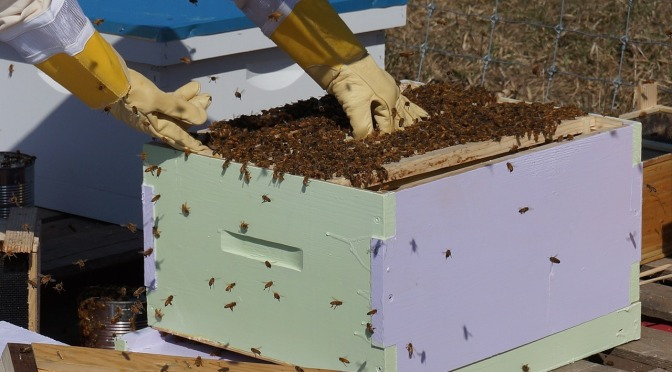 Thousands of bees are dying in Murchison. No-one knows why