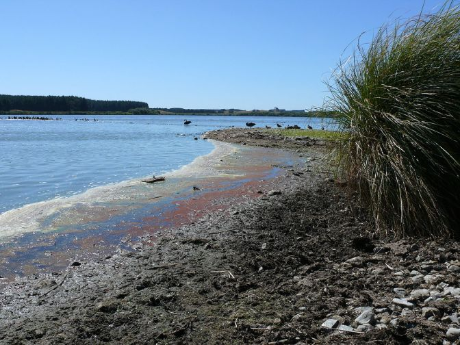 Lake Horowhenua epitomises the New Zealand Government's disdain for its indigenous people – both past and present