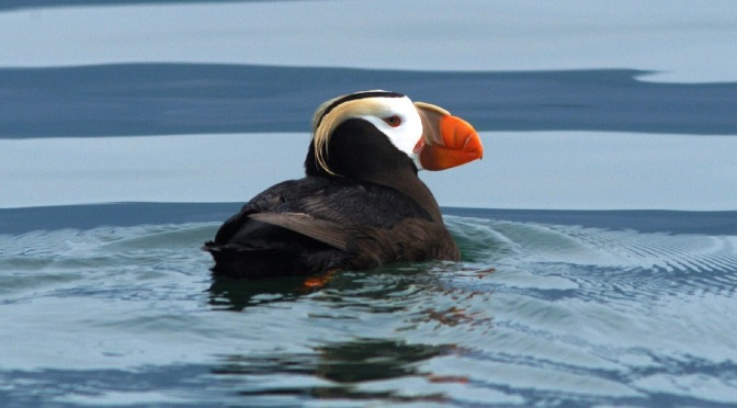 One in eight bird species threatened with extinction, global study finds (note, NZ's Kea also under threat)
