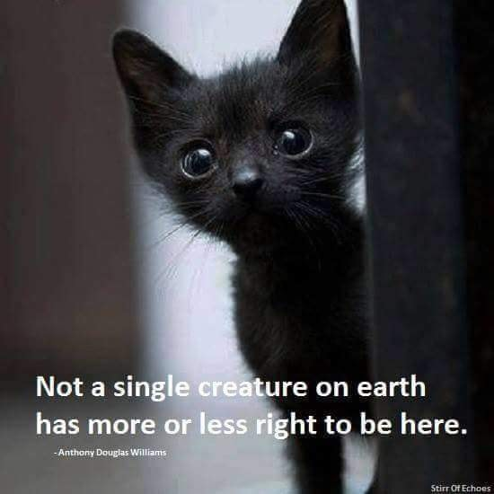 PHOTO KITTEN & QUOTE.jpg