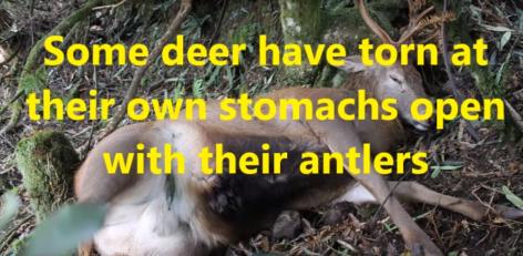 deer taupo 3