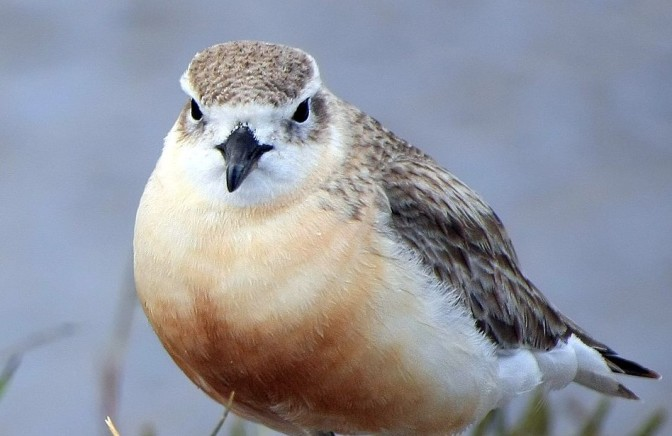 In 2004 the authorities killed almost 60% of an already endangered resident dotterel population with brodifacoum poison