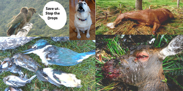 Stop The Drops! Save Animals From Torturous 1080 Poison Deaths – SIGN THE PETITION