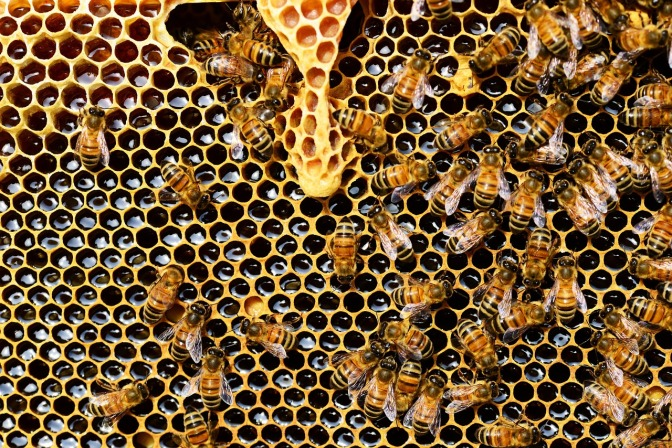 This Raw Honey Kills Every Kind of Bacteria Scientists Could Throw At It (Even the Superbugs!)