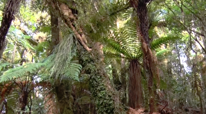 "The Taranaki forest is silent … ""eerie, no birds"" … observation from a local"