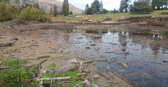 safe_image work under way at wanaka threatened grebe.jpg