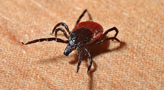 The Origin of Lyme Disease & Why It Eludes Treatment – Information You Weren't Privy to