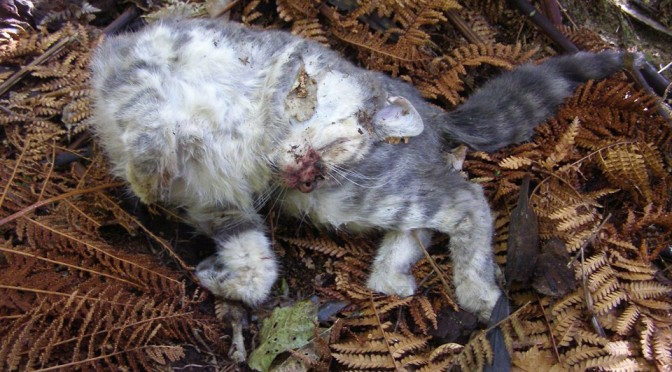 Could this be your cat? … the two-day- long cruel & agonizing route to death by the govt-funded Class 1A Ecotoxin 1080 poison