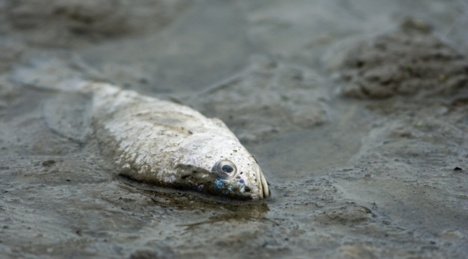 Study: U.K. rivers are filled with fish that are coked up, high on party drugs, and loaded with pesticides