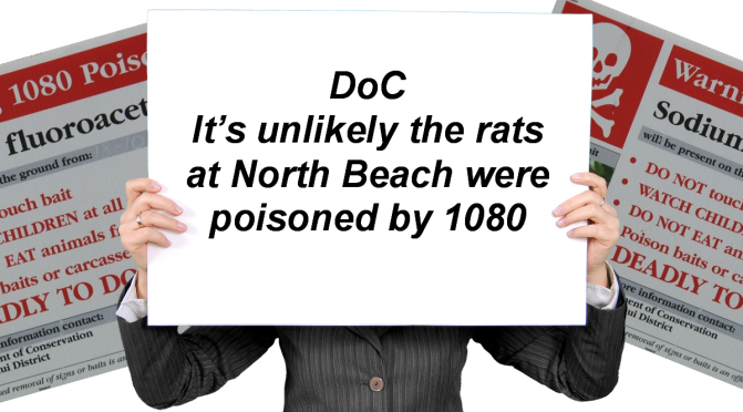 """Although DoC said it's 'UNLIKELY' the deaths of 600+ rats found at a Westport beach were caused by 1080, independent lab testing confirms they """"ALMOST CERTAINLY"""" were (See timeline)"""