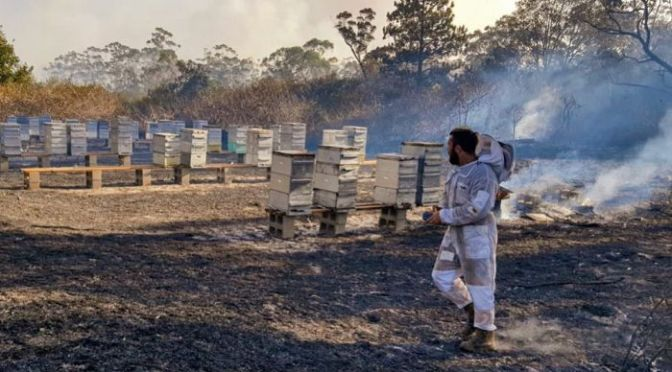 Beekeepers traumatised and counselled after hearing animals screaming in pain after bushfires