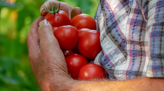 6 survival gardening crops