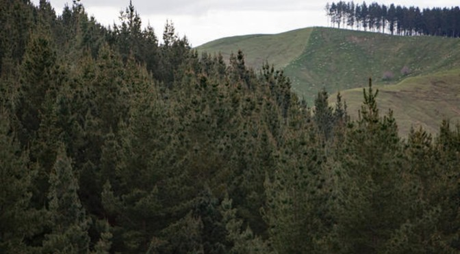 Forestry companies buying vast amounts of New Zealand's land