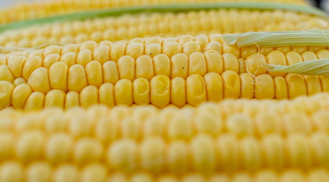 Shopper Warning As Approval Given For Pesticide Corn