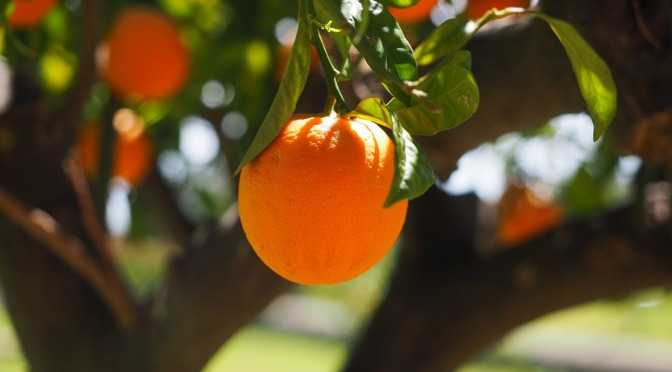 Study reveals vitamin C is key for stroke prevention and promoting heart health