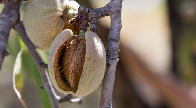Banned in Mexico, Canada & All the EU, Cancer Causing 'Propylene Oxide' is used in the US to Fumigate Your Almonds