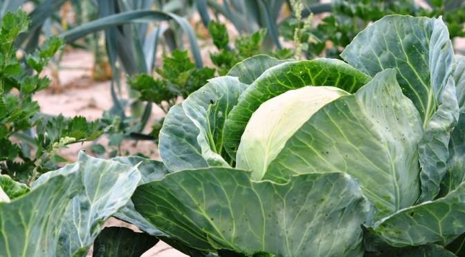 Christchurch social housing tenant's award-winning vegetable garden ripped up