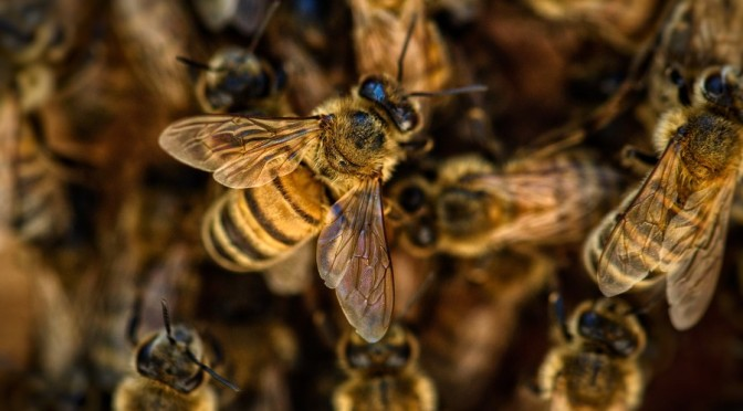 We haven't seen a quarter of known bee species since the 1990s