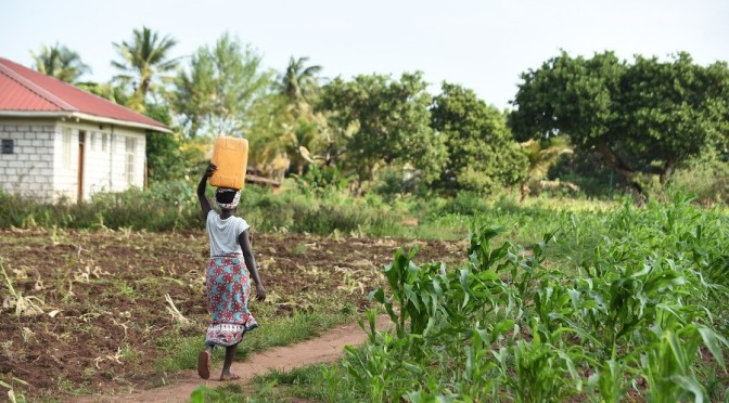 """""""Bad for African Farmers, Bad for the Planet"""": How the Gates Foundation Is Driving the Food System in the Wrong Direction"""