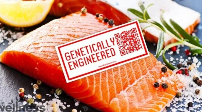 Largest US Retailers Refusing to Sell FDA-Approved GMO Salmon
