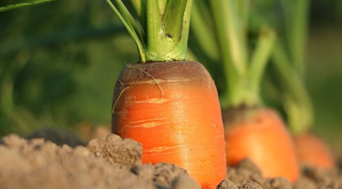 4 UNEXPECTED benefits of eating carrots